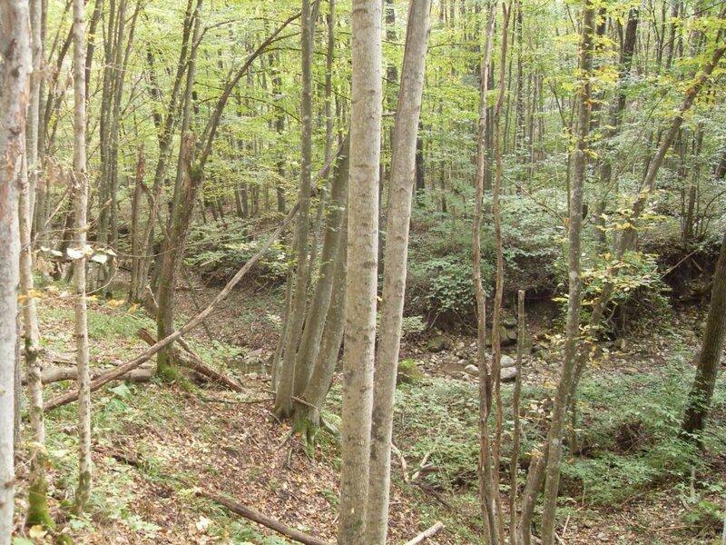 11 октября 2008, под Горячим Ключом, лес (43).JPG