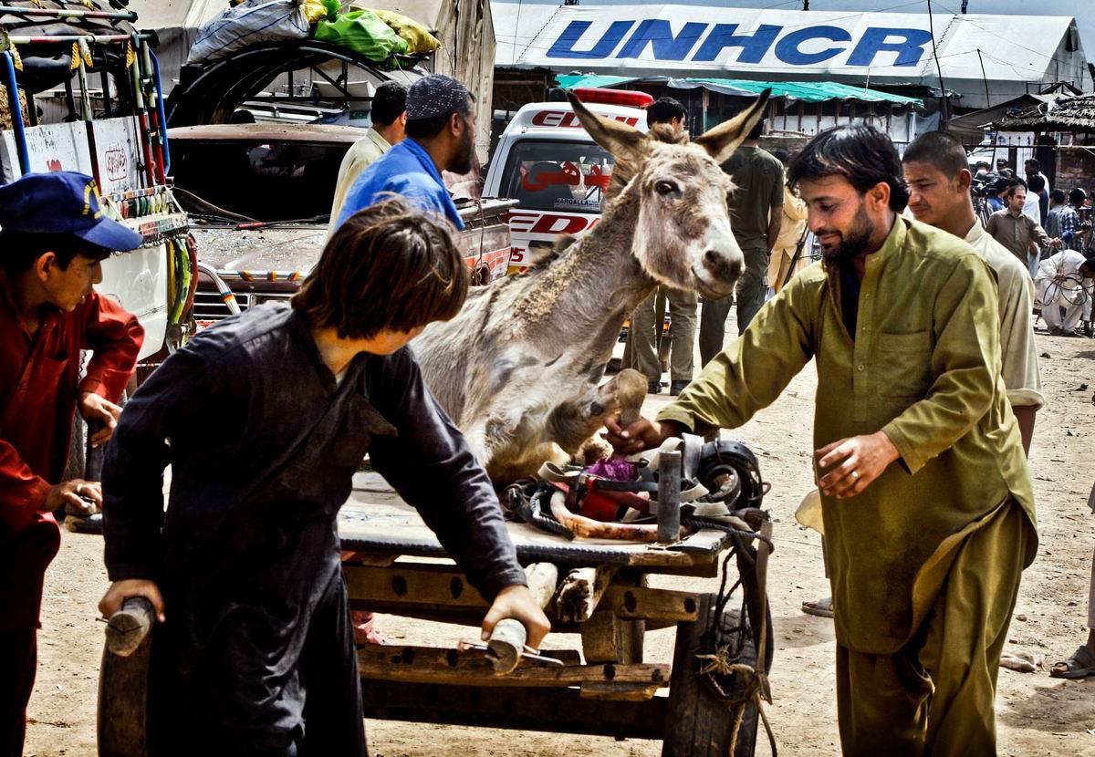 Наш ослик едет на тележке: Развлечения пакистанских чудаков
