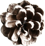 mzimm_merryxmas14_pinecone.png