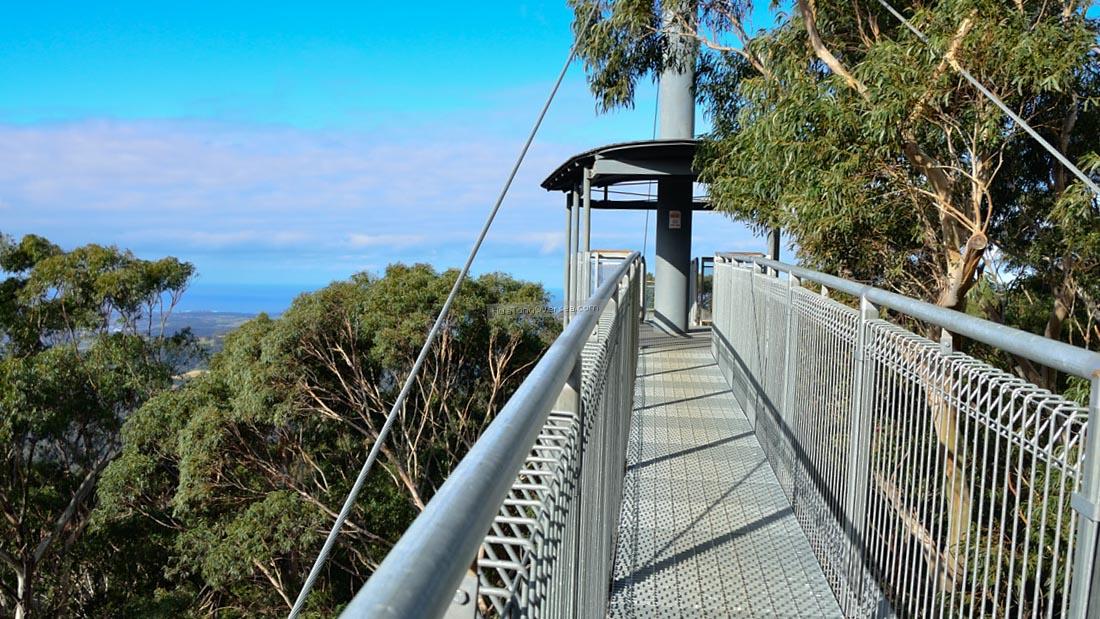 Illawarra Fly (Робертсон, Австралия) — 500-метровая металлическая тропинка на высоте 25 метров с вид
