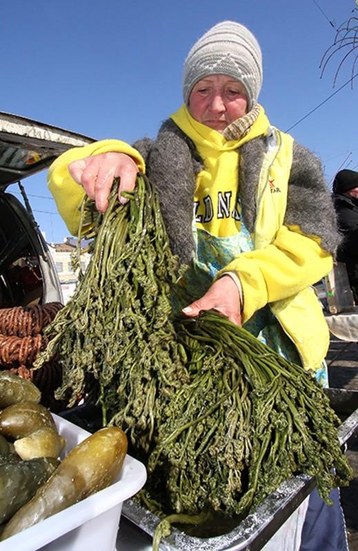 9. Папоротник Папоротник считается одним из древнейших растений на земле и традиционно используется