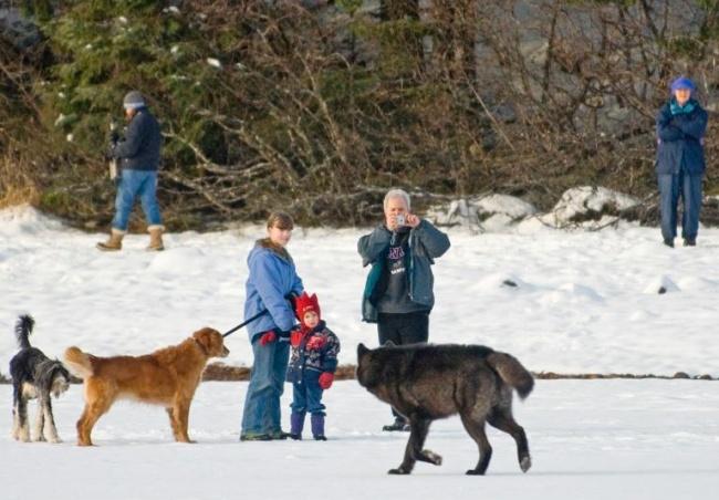 Ромео был наредкость дружелюбным существом ивскоре заручился дружбой нетолько остальных собак во