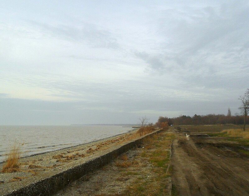 Ноябрьский берег под небом хмурым ... SAM_4443.JPG