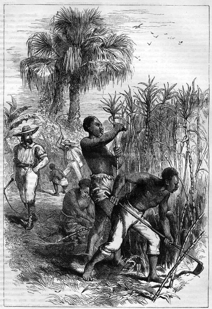 Рабы на плантации сахарного тростника (Гайана, 1870-е годы)
