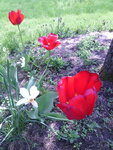 IMG_20150526_131457.jpg