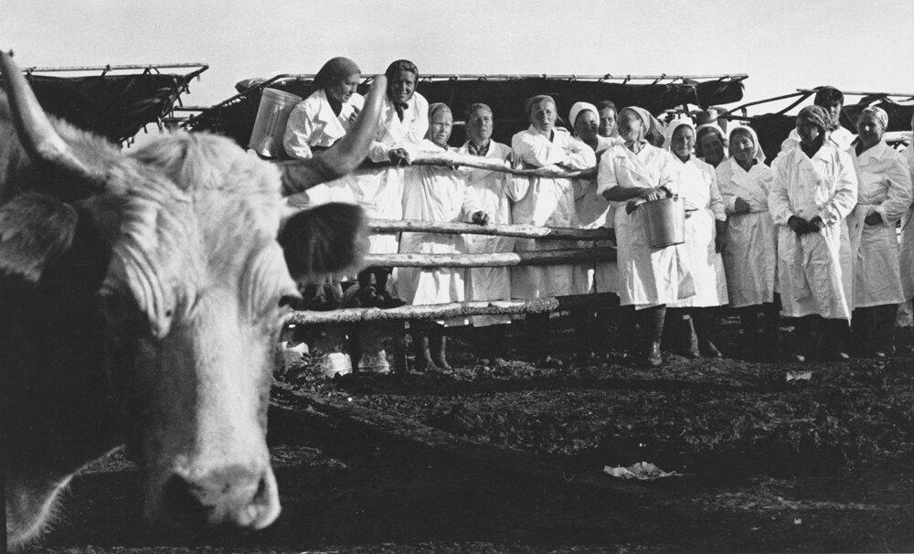 1971. Доярки с Алтая