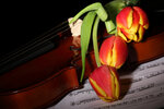 Violin, musical notes, candles and tulips (7).jpg