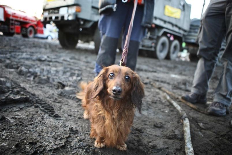 Как люди спасают животных 0 12cff4 beb413a3 orig