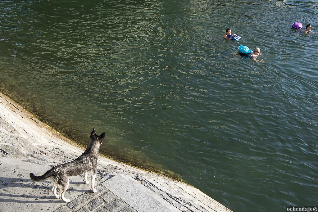 Понятно, что данный способ передвижения предназначен скорее для уверенных пловцов: Рейн — река с бол