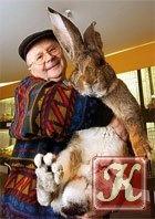 Книга Сборник кроликовода