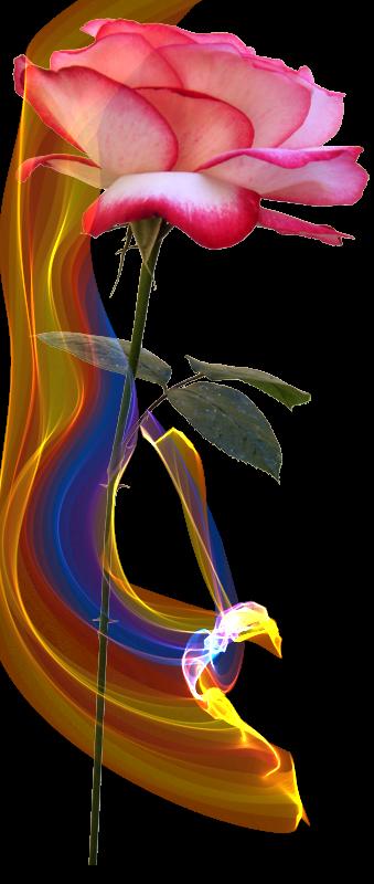 【引用】украшалочк花卉装饰,为您办理 - 枫林傲然 - .