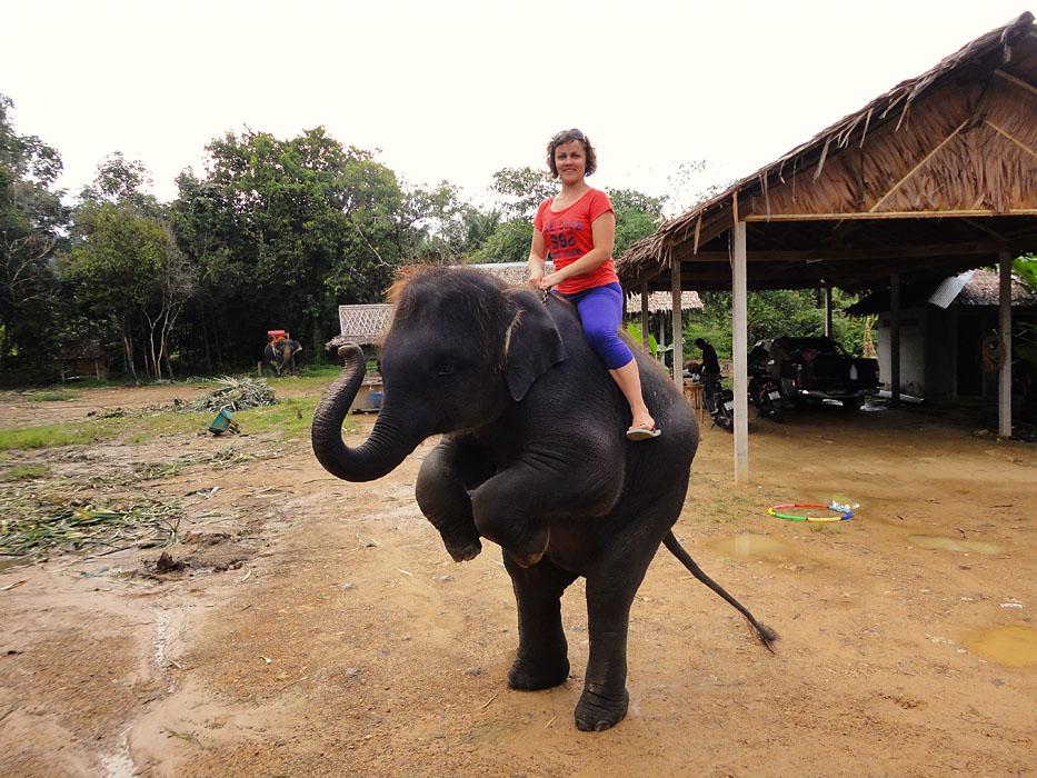 Мы не знали, что слоников колют иглой, чтобы они слушались