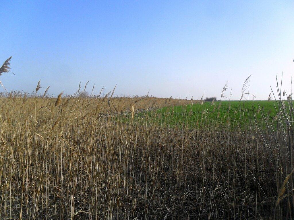 В пути, средь полей и камышей ...SAM_5522.JPG
