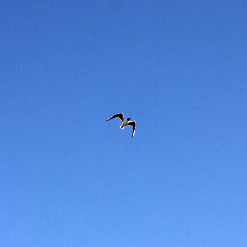 Чайка над рекой Жабня