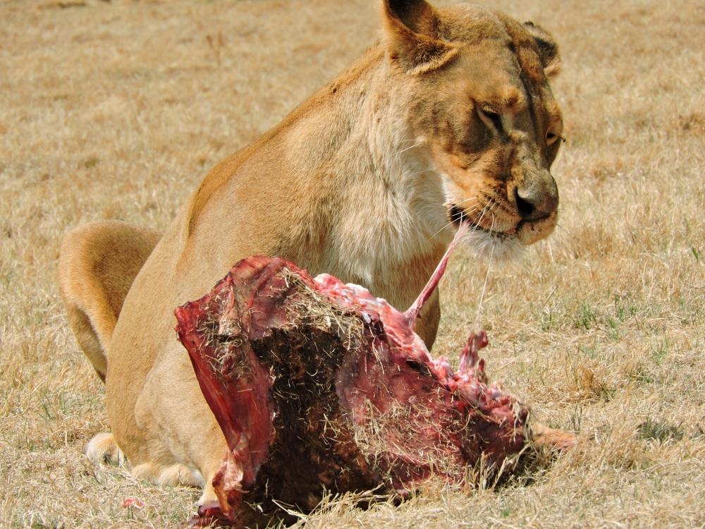 lions9.jpg