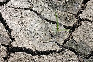 В почве иссякли запасы воды – урожай Молдовы под вопросом