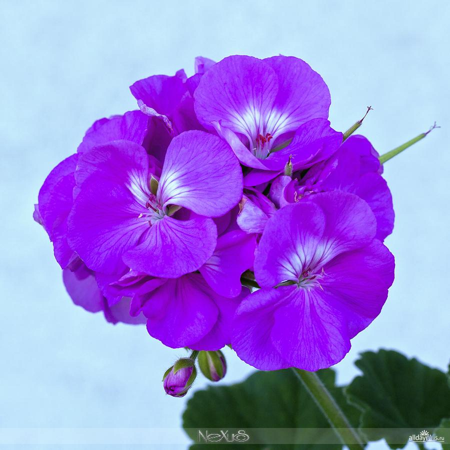 Я люблю все цветы, выпуск 132 | Разные цветы.