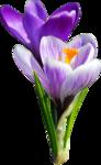 весенние цветы (21).png