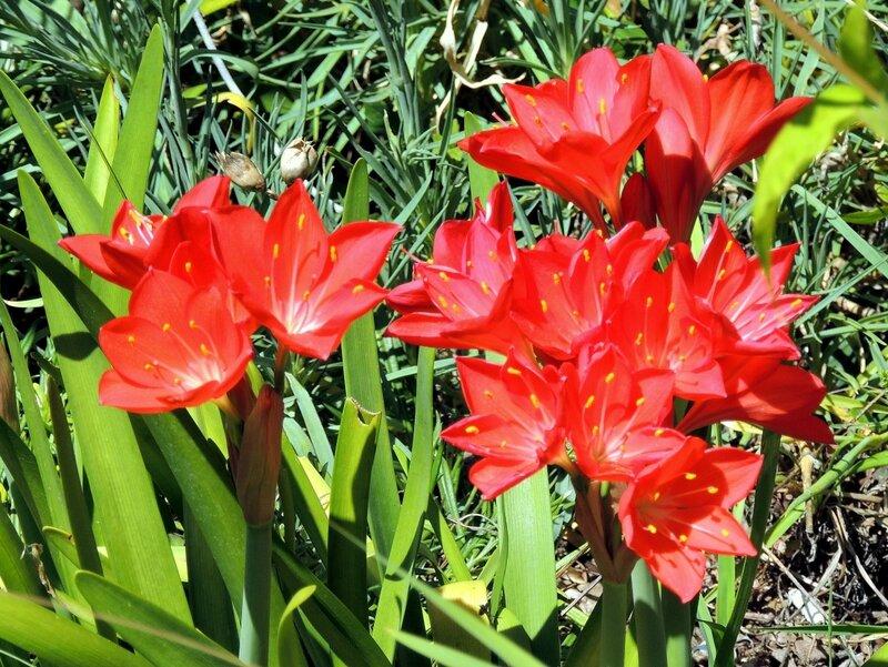Цветочки аленькие