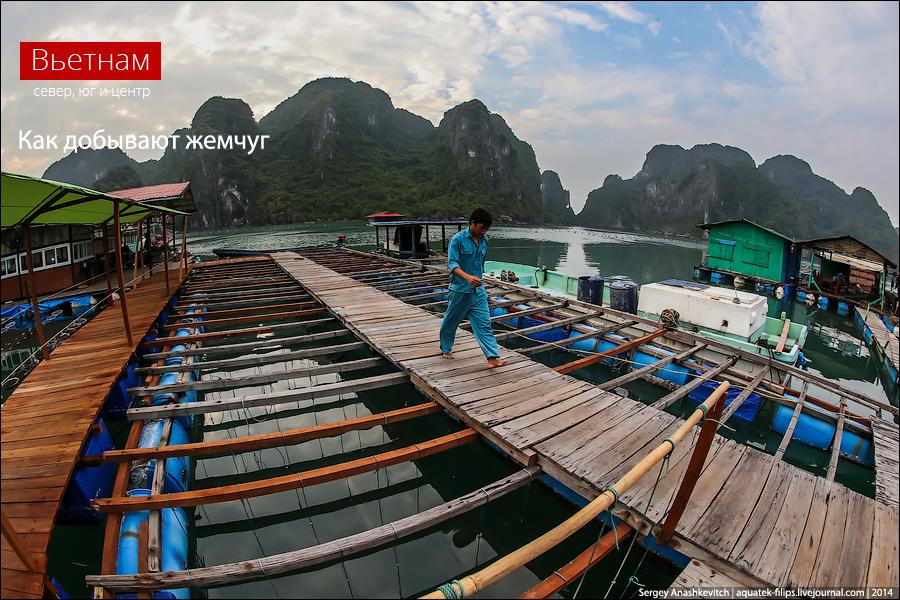 Жемчужная ферма во Вьетнаме