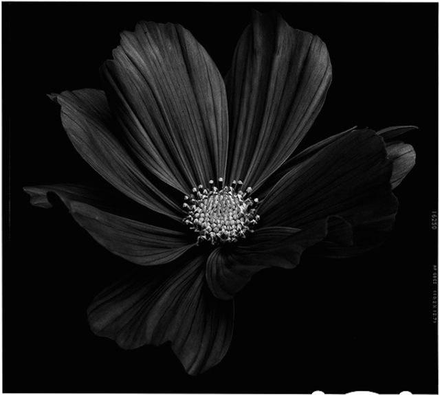 Send no flowers, Bettina Güber0.jpg