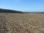 На безбрежном кукурузном поле