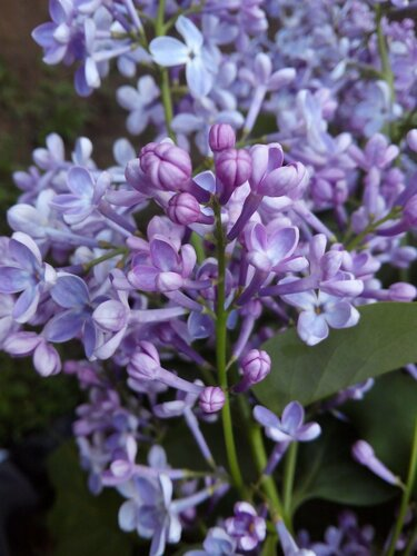 Фото - цветы