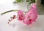 Орхидеи фаленопсис из холодного фарфора