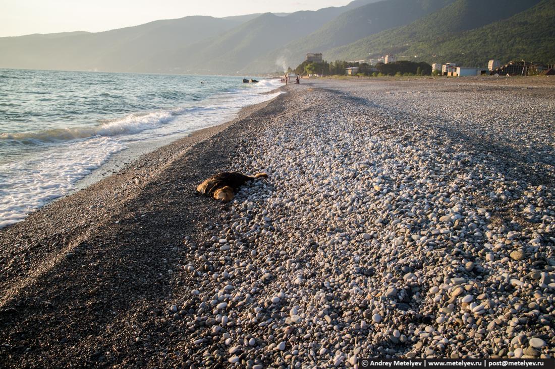 Дохлая собака после шторма на берегу