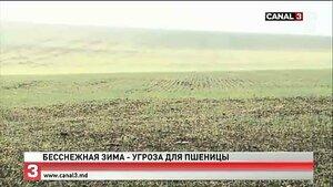 Бесснежная зима в Молдове обещает новые проблемы фермерам