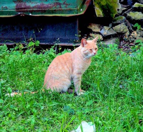 Коты из Выборга