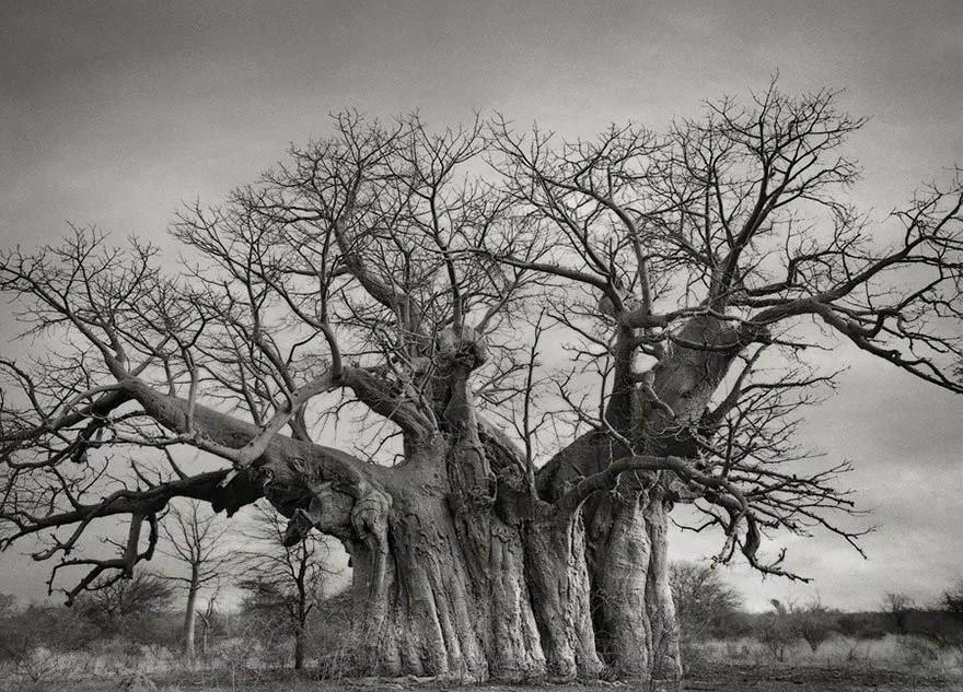 Женщина потратила 14 лет в поисках древних деревьев. И ведь не зря!
