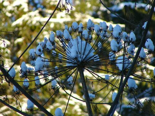 Январские цветы