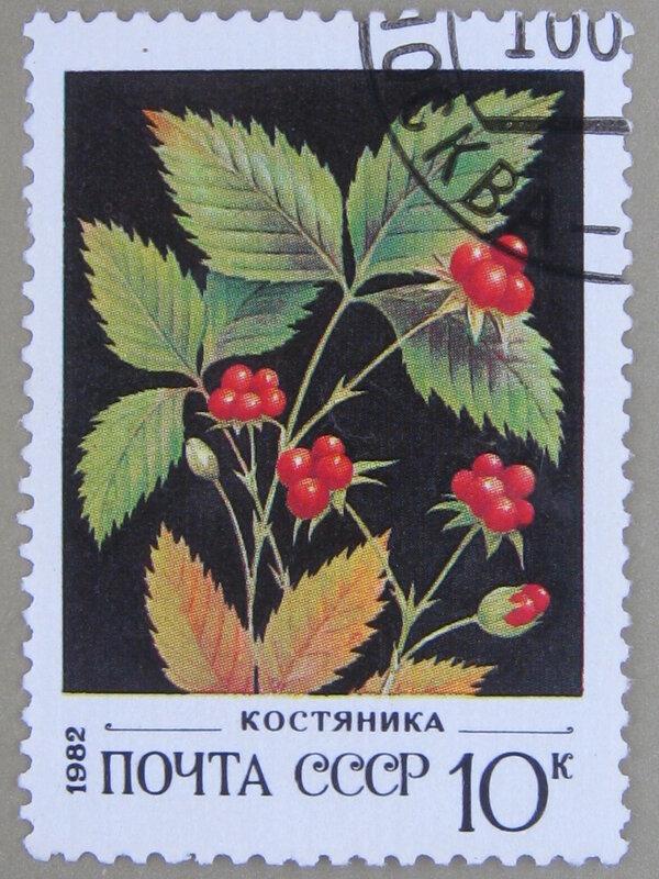 Костяника (Rubus saxatilis).