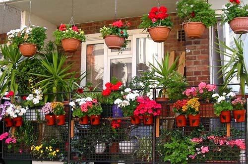 orangereia-na-balkone-6.jpg