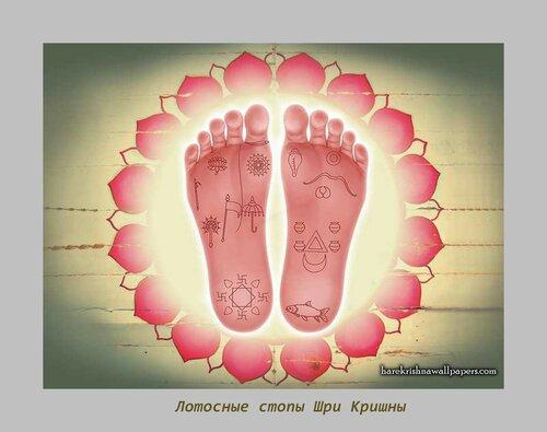 Sri Krishna Lotus Feet