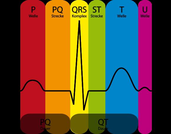 581px-EKG_Komplex.svg.png