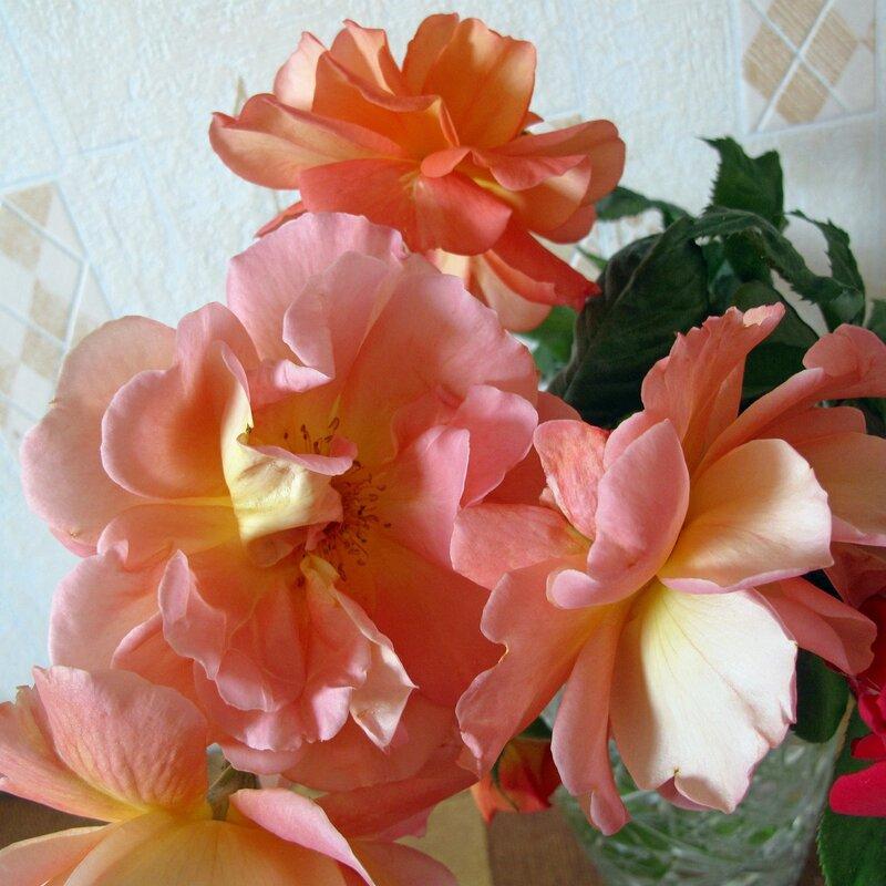 Нежные розы Крыма