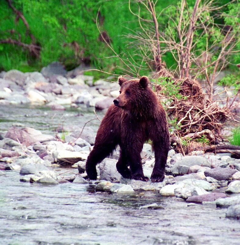 медведь1.jpg