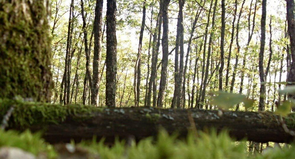 12 октября 2008, под Горячим Ключом, в лесу (95).JPG