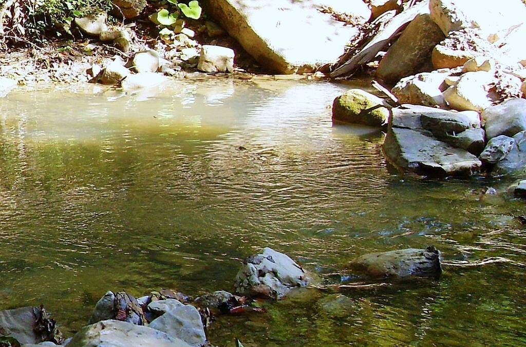 На реке ... 2008 год, под Горячим Ключом, на Природе (169).JPG