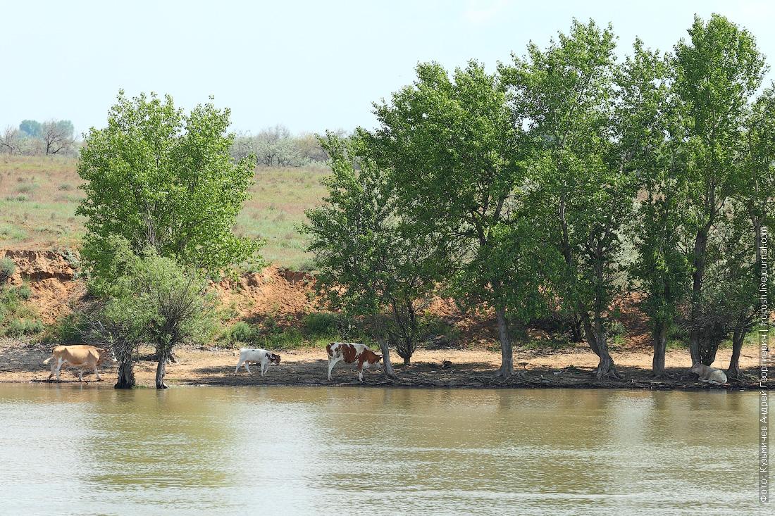 река Бахтемир на теплоходе Русь Великая по дельте Волги