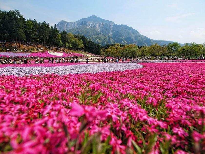 Цветущий розовым японский парк Хицудзияма. Фотографии 0 141ad6 75d41266 orig