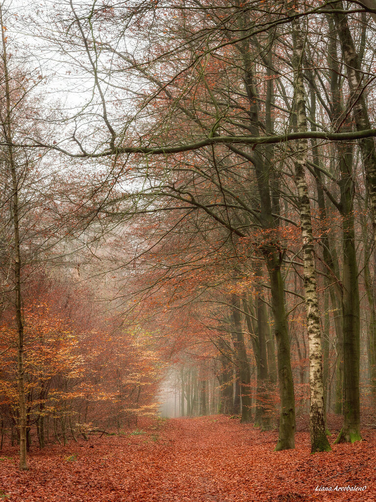Untitled_Veluwe1-1.jpg
