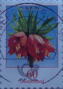 королевские лилии 60