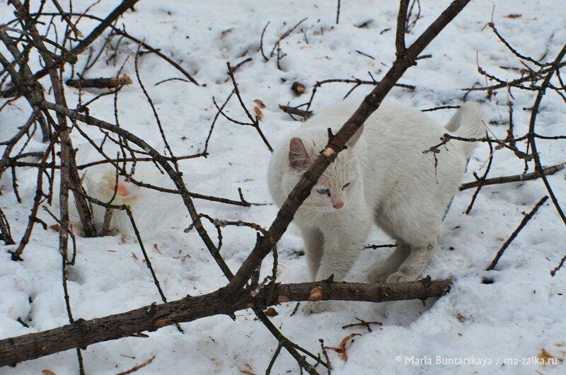 Кот с разными глазами, Саратов, городской парк культуры и отдыха им.Горького, 18 января 2015 года