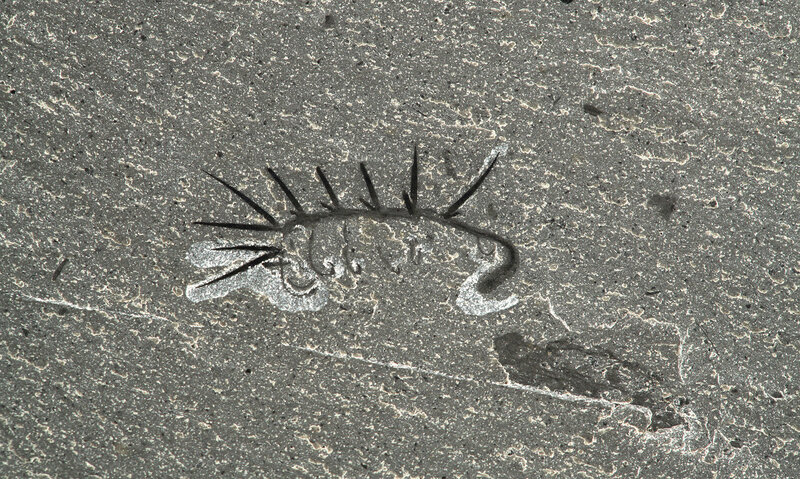 Hallucigenia-fossil-1.0.jpg