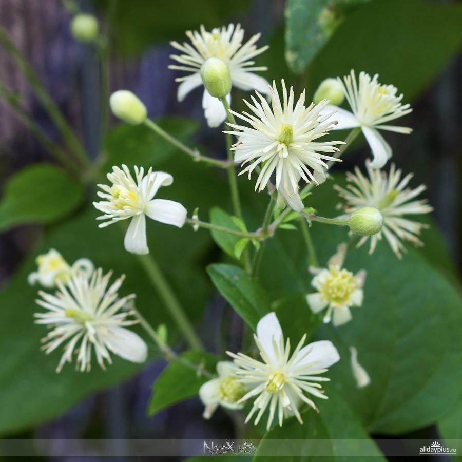 Я люблю в5a8се цветы, выпуск 132 | Разные цветы.