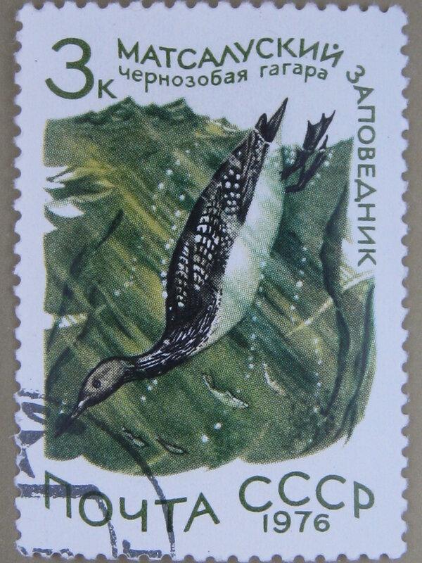 Чернозобая гагара (Gavia arctica). Матсалуский заповедник (Эстонская ССР).