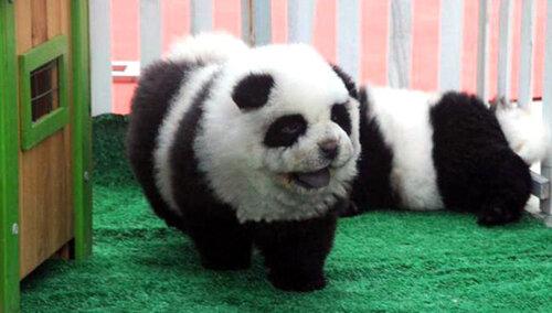 собака панда.jpg